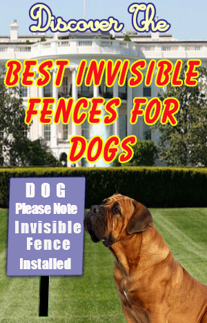 Best invisible fence for dogs o top five compared for Top rated underground dog fence